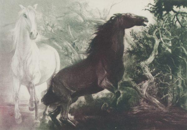 Gatja Helgart Rothe Horses 779